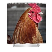 State Fair Rooster Shower Curtain