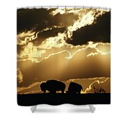 Stately American Bison Shower Curtain