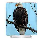 Stately Eagle Shower Curtain