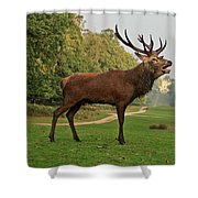 Stately Stag Shower Curtain