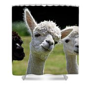 Stealing The Limelight Shower Curtain