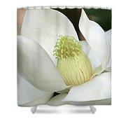 Steel Magnolia 33 Shower Curtain