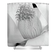 Steel Magnolia 46 - Bw Shower Curtain
