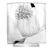 Steel Magnolia 47 - Bw - Water Paper Shower Curtain