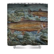 Steelhead Trout Fall Migration Shower Curtain