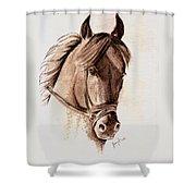 Steely Black Stallion Shower Curtain