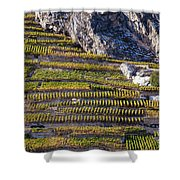 Steep Slope Viticulture In Valais Canton Shower Curtain