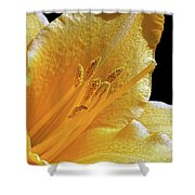 Stella D'oro - Day Lily Shower Curtain