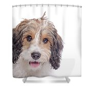 Stella1 Shower Curtain