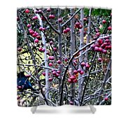 Stellar Jay In Crab Apples Shower Curtain