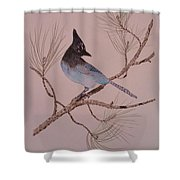 Stellar Jay On Ponderosa Branch Shower Curtain