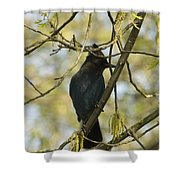 stellar Jay Shower Curtain