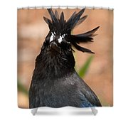Stellar's Jay With Rock Star Hair Shower Curtain