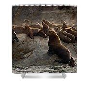 Stellers Sea Lions Eumetopias Jubatus Shower Curtain