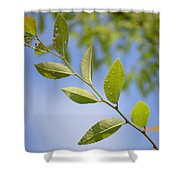 Stem Shower Curtain