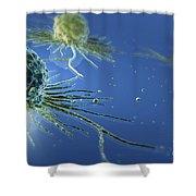 Stem Cells Shower Curtain