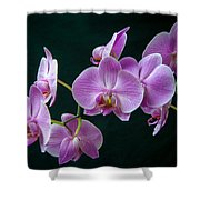 Stem Of Orchids  Shower Curtain