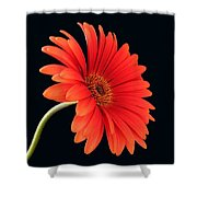 Stemming Beauty Shower Curtain