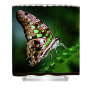 Step By Step Shower Curtain