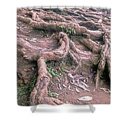 Steps With Roots Shower Curtain