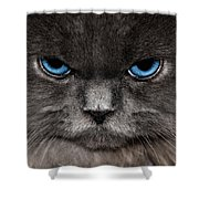 Stern Kitty Shower Curtain
