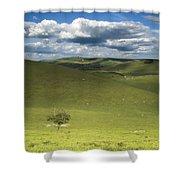 Steyning Bowl Shower Curtain