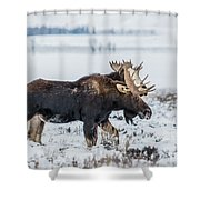 Sticking Together Shower Curtain