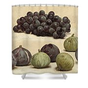 Still Life Of Grapes And Figs Shower Curtain