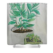 Still Life Plants Shower Curtain