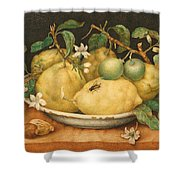 Still Life With Bowl Of Citrons Shower Curtain