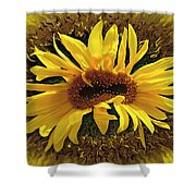 Still Life With Sunflower Shower Curtain
