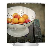 Still Life With Yellow Plums  Shower Curtain
