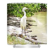 Still Looking For Lunch Gp Shower Curtain
