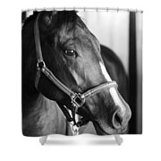 Horse And Stillness Shower Curtain