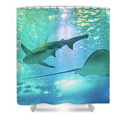 Sting Ray And Shark Shower Curtain