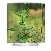 Stinging Nettle Shower Curtain