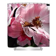 Stink Bug Shower Curtain