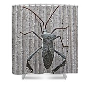 Stinkbug Shower Curtain