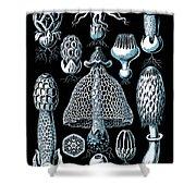 Stinkhorn Mushrooms Vintage Illustration Shower Curtain