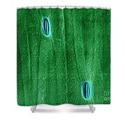 Stomata In A Green Onion Leaf, Esem Shower Curtain