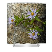 Stone Flowers Blue Shower Curtain