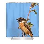 Stonechat On Branch Shower Curtain