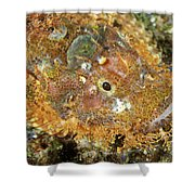 Stonefish Shower Curtain