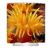 Stony Cup Coral Shower Curtain