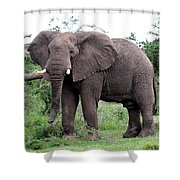 Stop And Stare Shower Curtain