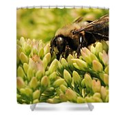 Stop For A Snack Shower Curtain