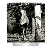 Stopping For A Pose - Southern Indiana Shower Curtain