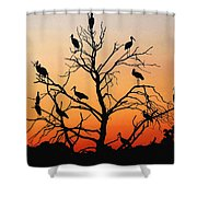 Storks In The Evening Sun Light Shower Curtain