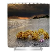 Storm And Sea Shell On Sanibel Shower Curtain