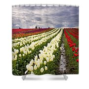 Storm Over Tulips Shower Curtain by Mike  Dawson
